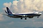 ばっきーさんが、関西国際空港で撮影した全日空 737-881の航空フォト(写真)