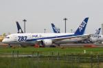 セブンさんが、成田国際空港で撮影した全日空 787-8 Dreamlinerの航空フォト(飛行機 写真・画像)