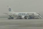 ヒロリンさんが、ブリュッセル国際空港で撮影したパンアメリカン航空 A310-222の航空フォト(写真)