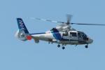 木人さんが、成田国際空港で撮影したオールニッポンヘリコプター AS365N2 Dauphin 2の航空フォト(写真)