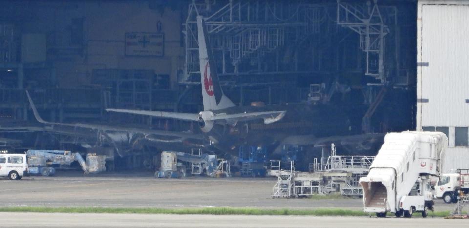 チャレンジャーさんの日本航空 Boeing 737-800 (不明) 航空フォト