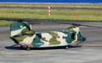 CL&CLさんが、奄美空港で撮影した航空自衛隊 CH-47J/LRの航空フォト(写真)