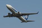 アングリー J バードさんが、福岡空港で撮影した全日空 737-881の航空フォト(写真)