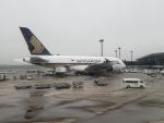 MRJさんが、成田国際空港で撮影したシンガポール航空 A380-841の航空フォト(写真)