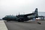 こうきさんが、千歳基地で撮影した航空自衛隊 C-130H Herculesの航空フォト(写真)