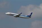 344さんが、福岡空港で撮影した全日空 737-881の航空フォト(写真)