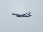 いぶちゃんさんが、シアトル タコマ国際空港で撮影したアラスカ航空 737-990の航空フォト(写真)