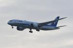 kuro2059さんが、羽田空港で撮影した全日空 787-8 Dreamlinerの航空フォト(写真)