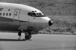ヒロリンさんが、小松空港で撮影した全日空 737-281/Advの航空フォト(飛行機 写真・画像)