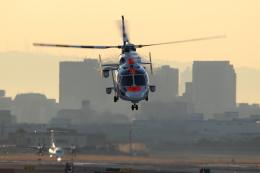 kaz787さんが、伊丹空港で撮影したオールニッポンヘリコプター AS365N3 Dauphin 2の航空フォト(飛行機 写真・画像)