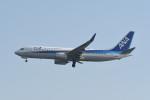 kuro2059さんが、羽田空港で撮影した全日空 737-881の航空フォト(写真)