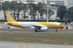matsuさんが、シンガポール・チャンギ国際空港で撮影したスクート A320-232の航空フォト(写真)