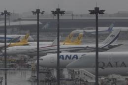 木人さんが、成田国際空港で撮影したスワジランド政府 A340-313の航空フォト(飛行機 写真・画像)