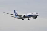 beimax55さんが、羽田空港で撮影した全日空 787-8 Dreamlinerの航空フォト(写真)