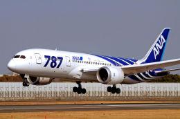 キットカットさんが、伊丹空港で撮影した全日空 787-8 Dreamlinerの航空フォト(写真)