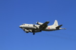 non-nonさんが、鹿屋航空基地で撮影した海上自衛隊 P-3Cの航空フォト(飛行機 写真・画像)
