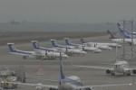 Mitsuki1211さんが、中部国際空港で撮影した全日空 DHC-8-400の航空フォト(写真)