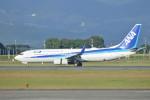 KKiSMさんが、鹿児島空港で撮影した全日空 737-881の航空フォト(写真)