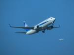 バンチャンさんが、那覇空港で撮影した全日空 737-881の航空フォト(写真)