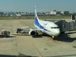 737dolphinさんが、中部国際空港で撮影した全日空 737-500の航空フォト(写真)