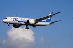 cocoa11さんが、成田国際空港で撮影した全日空 787-8 Dreamlinerの航空フォト(写真)