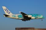 Co-pilootjeさんが、成田国際空港で撮影した全日空 A380-841の航空フォト(飛行機 写真・画像)