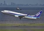 雲霧さんが、羽田空港で撮影した全日空 737-881の航空フォト(写真)