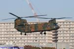 Chofu Spotter Ariaさんが、立川飛行場で撮影した陸上自衛隊 CH-47Jの航空フォト(写真)