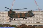 Chofu Spotter Ariaさんが、立川飛行場で撮影した陸上自衛隊 CH-47Jの航空フォト(飛行機 写真・画像)