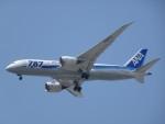 Blue605Aさんが、福岡空港で撮影した全日空 787-8 Dreamlinerの航空フォト(写真)