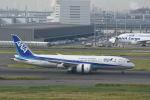 どんちんさんが、羽田空港で撮影した全日空 787-8 Dreamlinerの航空フォト(写真)