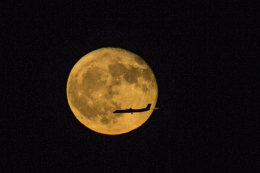 Cygnus00さんが、新千歳空港で撮影した全日空 DHC-8 Dash 8の航空フォト(飛行機 写真・画像)