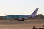 AkiChup0nさんが、成田国際空港で撮影した全日空 A380-841の航空フォト(写真)