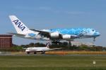 青春の1ページさんが、成田国際空港で撮影した全日空 A380-841の航空フォト(写真)