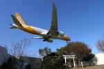 トリトンブルーSHIROさんが、成田国際空港で撮影したスクート 787-8 Dreamlinerの航空フォト(写真)