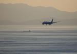 タミーさんが、松山空港で撮影した全日空 787-8 Dreamlinerの航空フォト(写真)