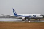森の美玲Pさんが、函館空港で撮影した全日空 787-8 Dreamlinerの航空フォト(写真)