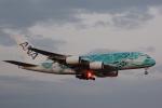 banshee02さんが、成田国際空港で撮影した全日空 A380-841の航空フォト(写真)