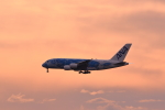 マーサさんが、成田国際空港で撮影した全日空 A380-841の航空フォト(写真)