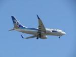 commet7575さんが、福岡空港で撮影した全日空 737-781の航空フォト(写真)