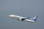どんちんさんが、羽田空港で撮影した全日空 737-881の航空フォト(写真)