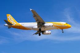 delawakaさんが、プーケット国際空港で撮影したスクート A320-232の航空フォト(写真)