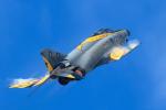 kuraykiさんが、茨城空港で撮影した航空自衛隊 F-4EJ Kai Phantom IIの航空フォト(飛行機 写真・画像)