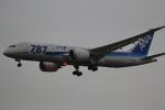 VFRさんが、成田国際空港で撮影した全日空 787-8 Dreamlinerの航空フォト(写真)
