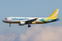 walker2000さんが、成田国際空港で撮影したセブパシフィック航空 A320-214の航空フォト(飛行機 写真・画像)