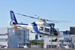蒼い鳩さんが、東京ヘリポートで撮影したオールニッポンヘリコプター AS365N2 Dauphin 2の航空フォト(飛行機 写真・画像)
