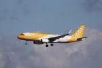 KAZFLYERさんが、成田国際空港で撮影したスクート A320-232の航空フォト(飛行機 写真・画像)
