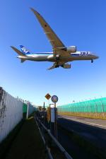 トリトンブルーSHIROさんが、成田国際空港で撮影した全日空 787-8 Dreamlinerの航空フォト(飛行機 写真・画像)