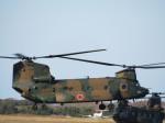 ランチパッドさんが、木更津飛行場で撮影した陸上自衛隊 CH-47JAの航空フォト(写真)