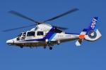 ブルーさんさんが、静岡ヘリポートで撮影したオールニッポンヘリコプター AS365N3 Dauphin 2の航空フォト(写真)